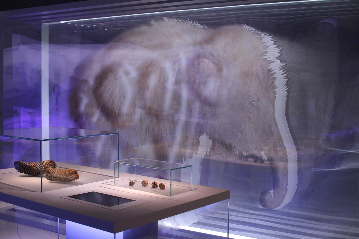Ausstellung staatliches Museum für Archäologie in Chemnitz