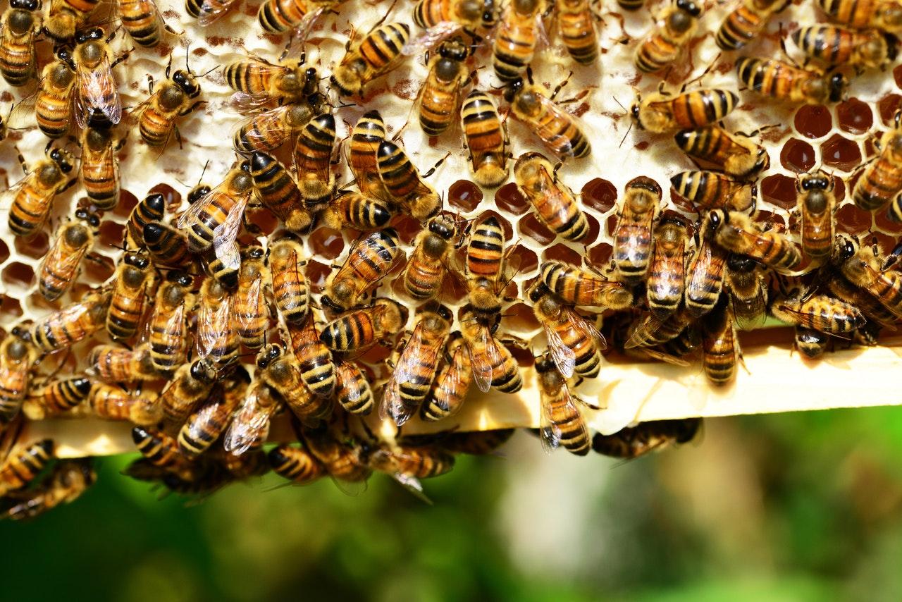 Bienen sitzen auf Wabe