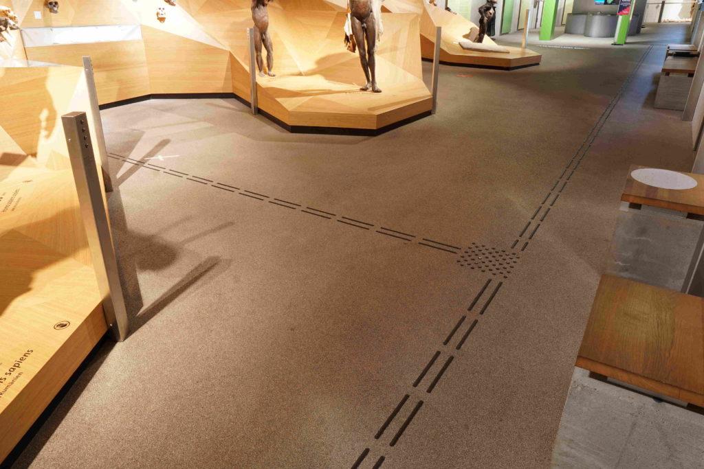 Das Bodenleitsystem im Neanderthal Museum vor dem Stammbaum.