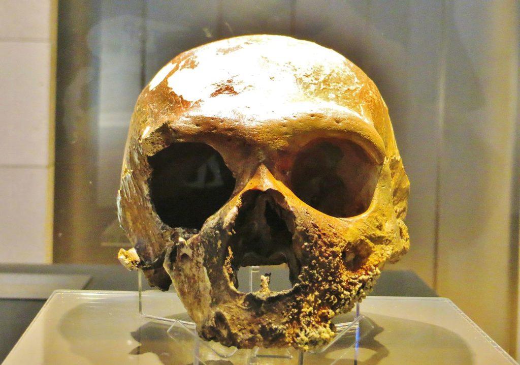 Foto des 1939 gefundenen Neanderthaler Schädels in der Guattari Höhle.