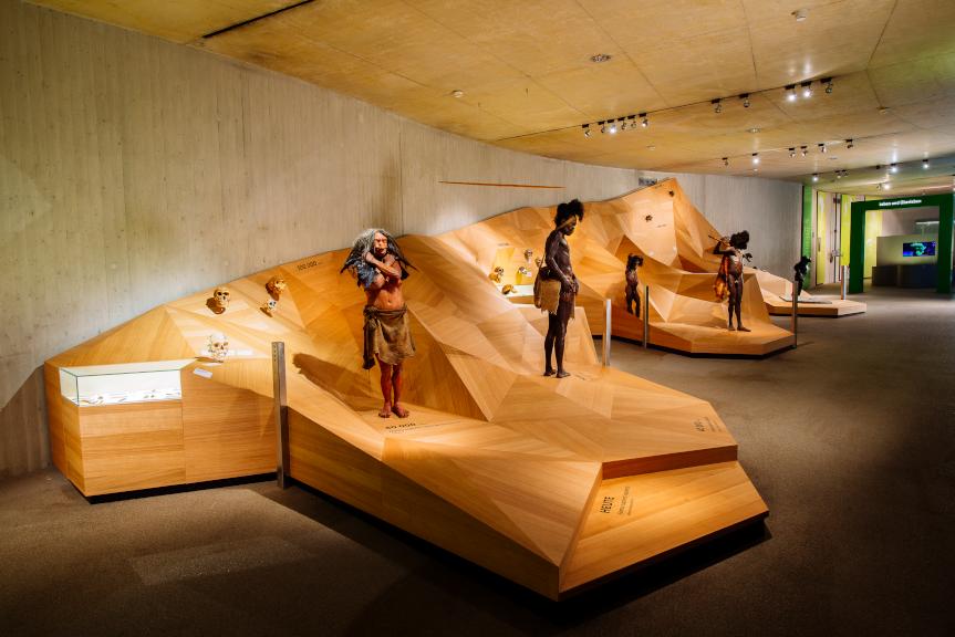 Der Stammbusch zeigt eine Art Podest in Gebirgsform, aus Holz. Darauf stehen verschiedene Konstruktionen von unterschiedlichen Ur-Menschen.