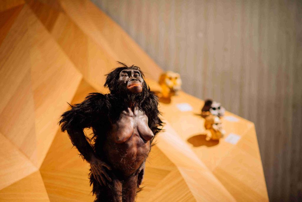 Lucy, die Rekonstruktion des fossilen Teilskeletts eines Vormenschen Australopithecus afarensis auf dem hölzernen Stammbusch.